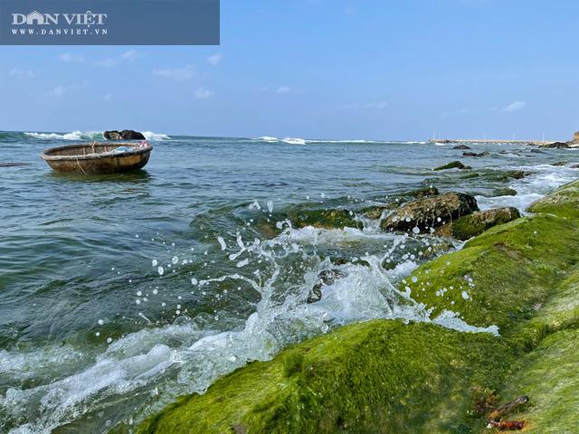 Quảng Ngãi: Mê hoặc rêu xanh nơi sóng tự tình với đá ở thiên đường du lịch  - Ảnh 12.