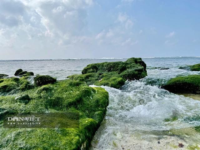 Quảng Ngãi: Mê hoặc rêu xanh nơi sóng tự tình với đá ở thiên đường du lịch  - Ảnh 1.