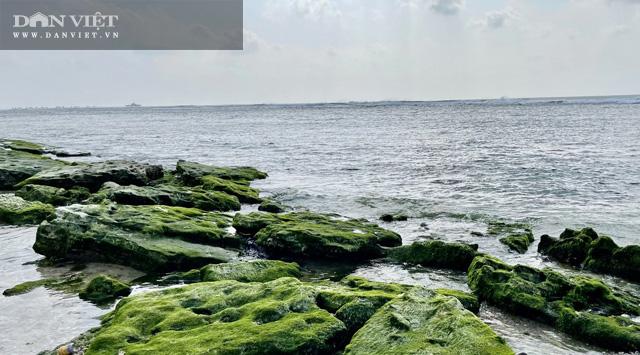 Quảng Ngãi: Mê hoặc rêu xanh nơi sóng tự tình với đá ở thiên đường du lịch  - Ảnh 2.