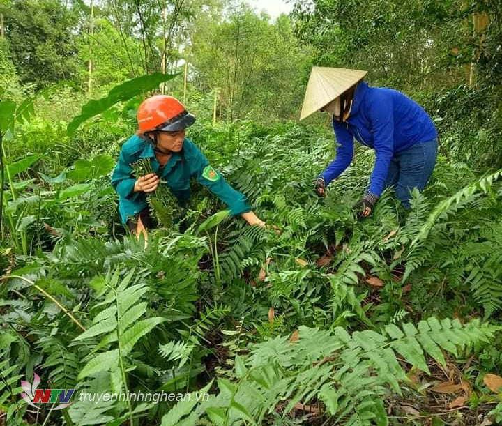 """Nghệ An: Nông dân rủ nhau lội suối săn tìm hái thứ rau rừng nghe tên đã thấy """"sống thọ"""", ăn quen mồm sẽ """"nghiện"""" - Ảnh 3."""
