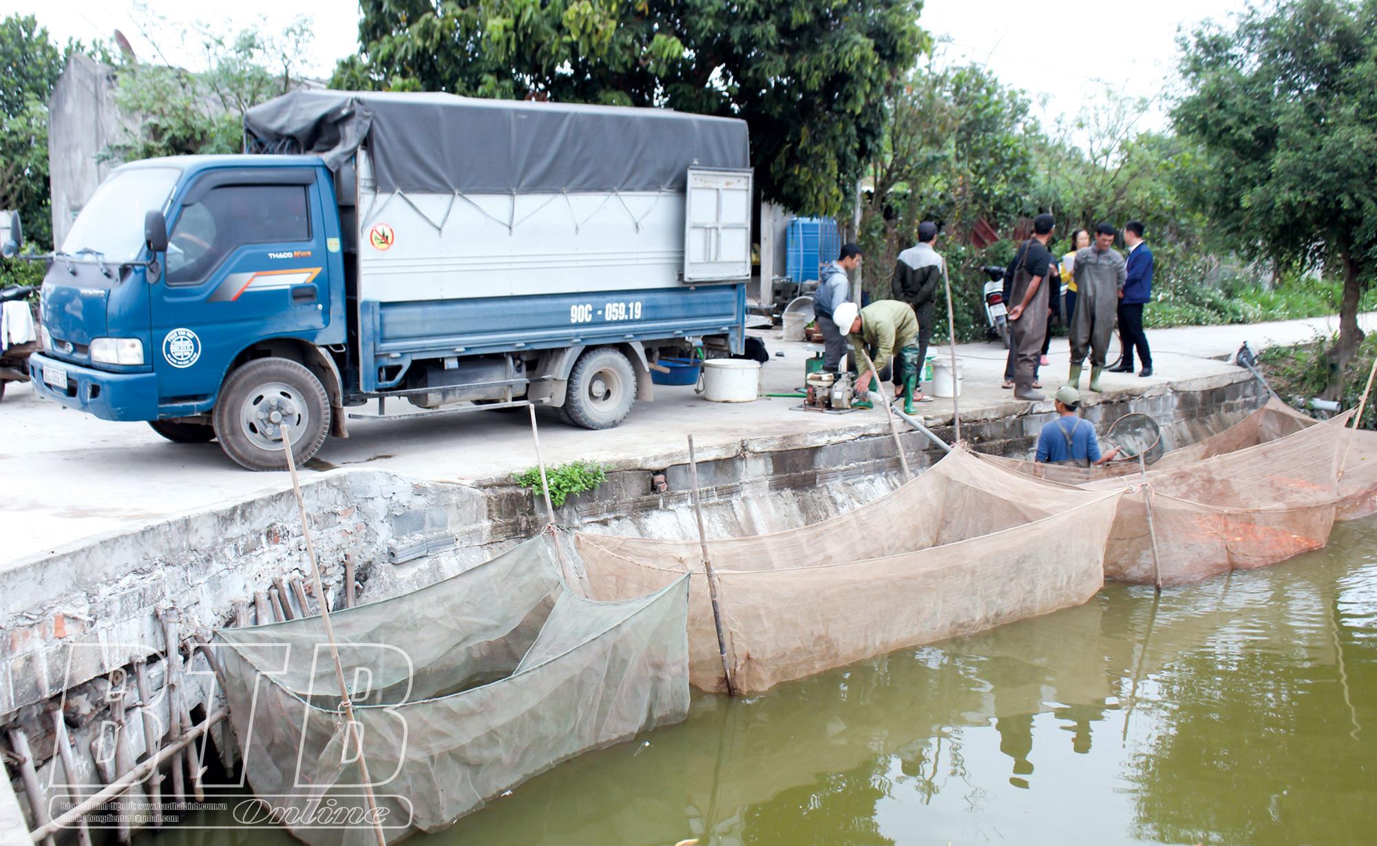 Thái Bình: Ô tô, xe máy lao xao, người ra vào tấp nập ở làng này mua thứ gì mà mang đi gấp gáp? - Ảnh 4.