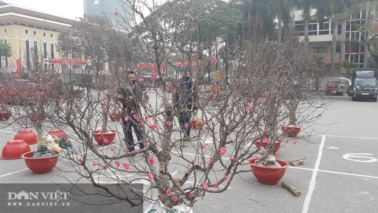 Thái Nguyên: Tết cận kề, đào, hoa, cây cảnh nườm nượp xuống phố nhưng vắng bóng người mua - Ảnh 3.