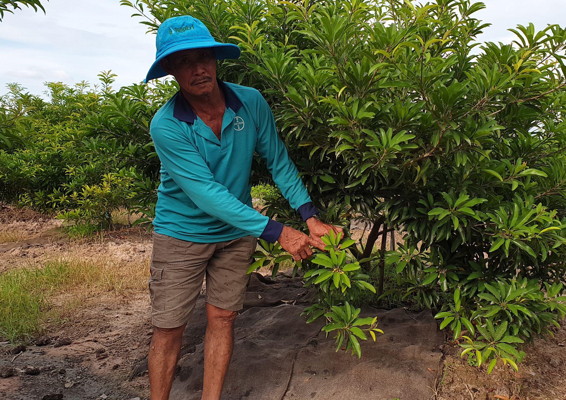 """Cây """"tỷ phú"""" mình đầy gai chi chít ở Tây Ninh là cây gì mà nông dân cứ trồng 1ha lại thu về 1 tỷ? - Ảnh 1."""