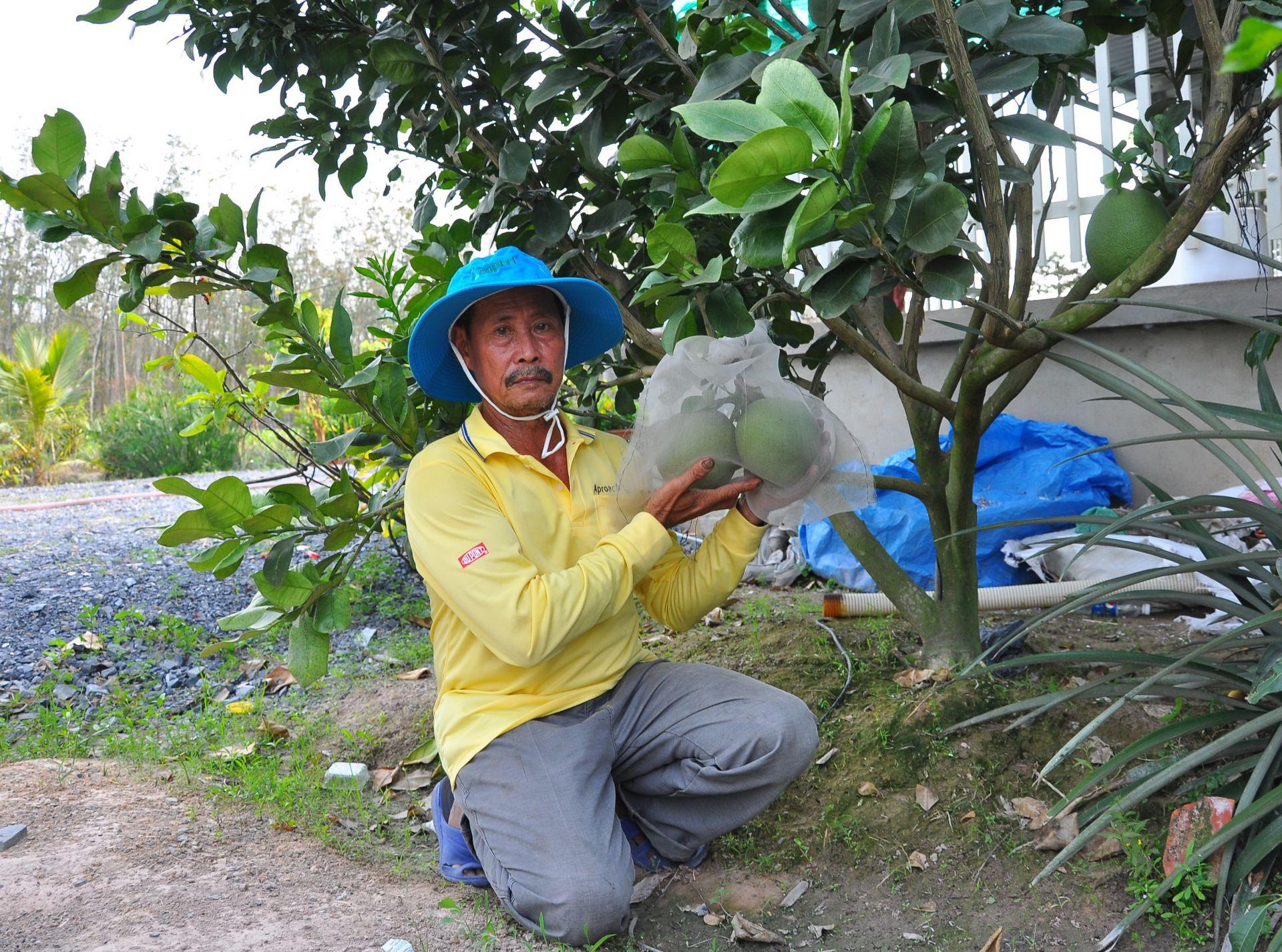 """Cây """"tỷ phú"""" mình đầy gai chi chít ở Tây Ninh là cây gì mà nông dân cứ trồng 1ha lại thu về 1 tỷ? - Ảnh 4."""