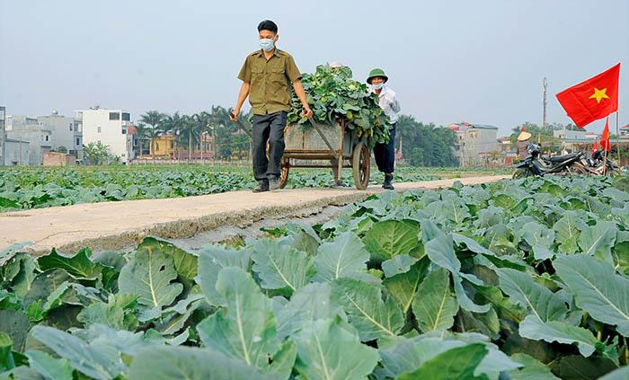 """Hải Dương: Hơn 100 tấn rau xanh chia lửa với """"tâm dịch"""" Chí Linh - Ảnh 2."""