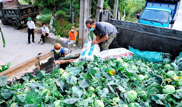 """Hải Dương: Hơn 100 tấn rau xanh chia lửa với """"tâm dịch"""" Chí Linh - Ảnh 1."""
