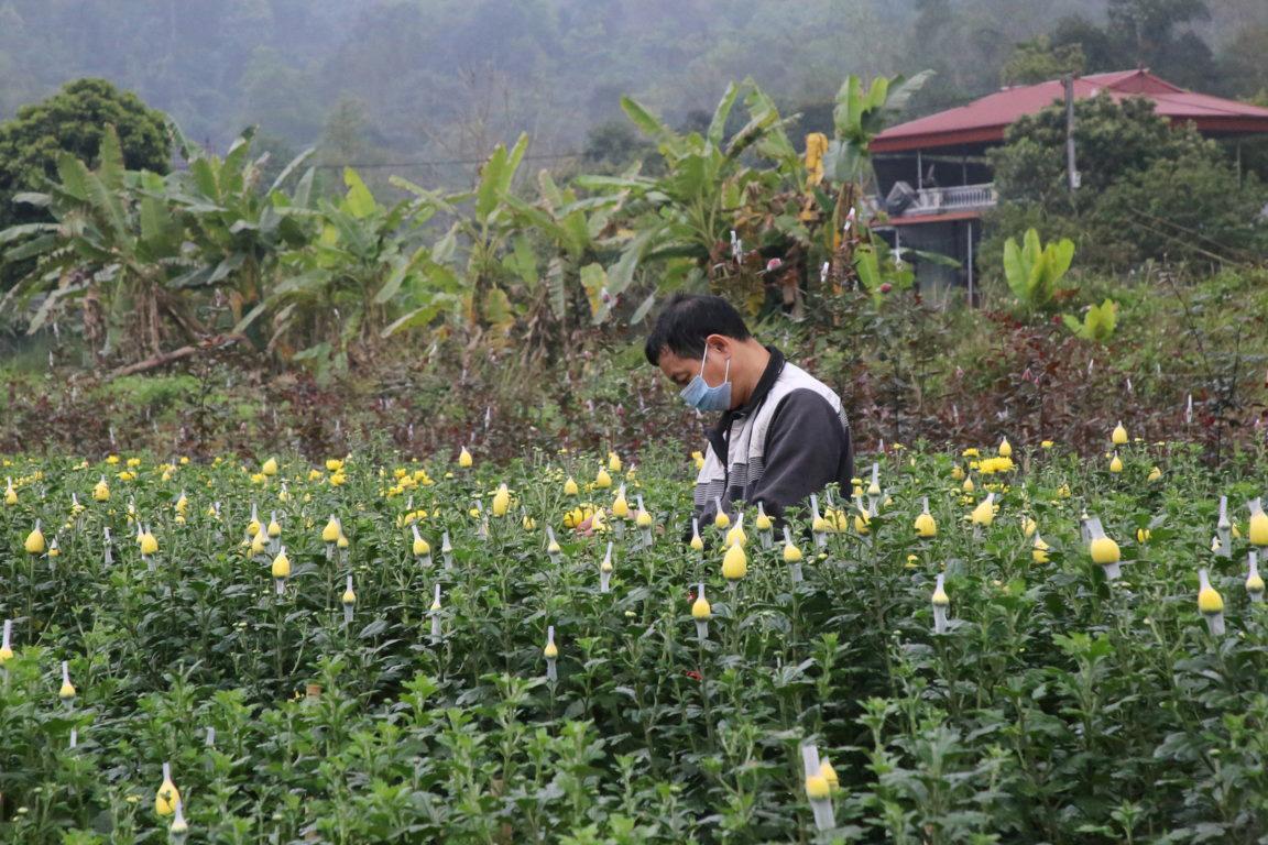 """Lào Cai: Vườn hoa đào Tết nở bung đẹp mê li, khách háo hức xin vô còn còn chủ """"buồn như trấu cắn"""". Vì sao? - Ảnh 1."""