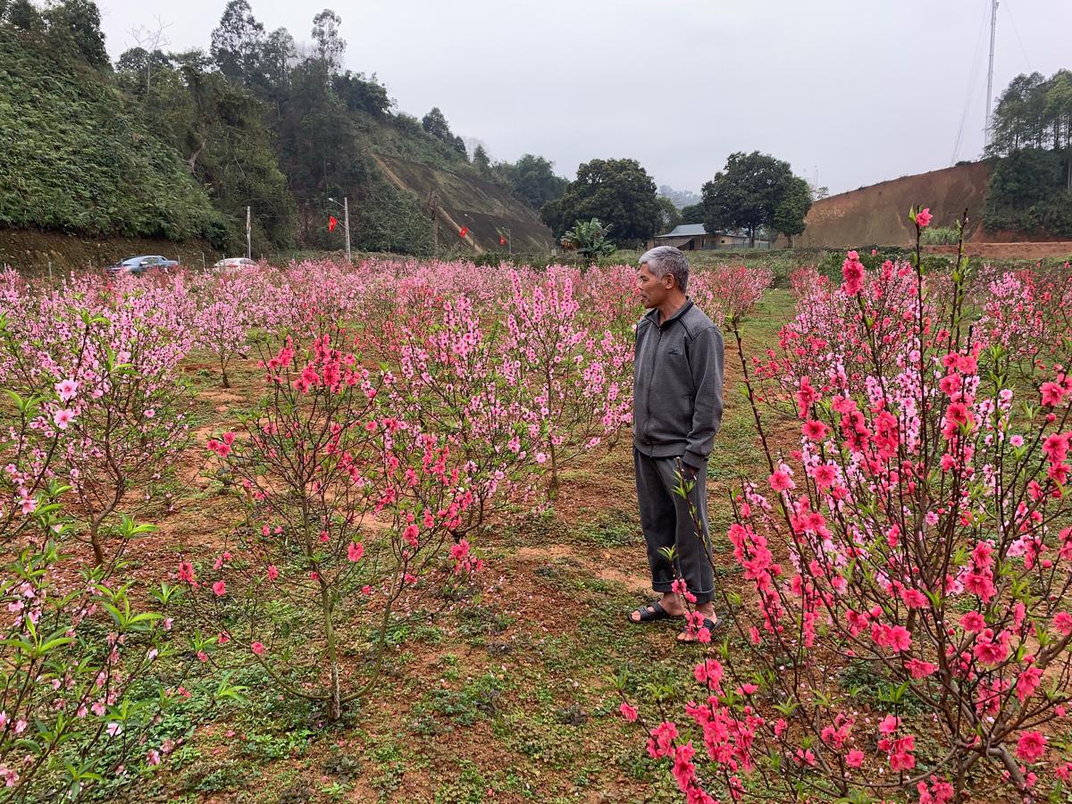 """Lào Cai: Vườn hoa đào Tết nở bung đẹp mê li, khách háo hức xin vô còn còn chủ """"buồn như trấu cắn"""". Vì sao? - Ảnh 4."""