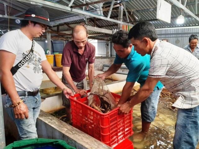 """Bạc Liêu: Dịch Covid-19 làm giá lươn thịt giảm 50.000 đồng/ký, nhiều hộ nuôi lươn không bùn đành """"bấm bụng """" làm điều này - Ảnh 1."""