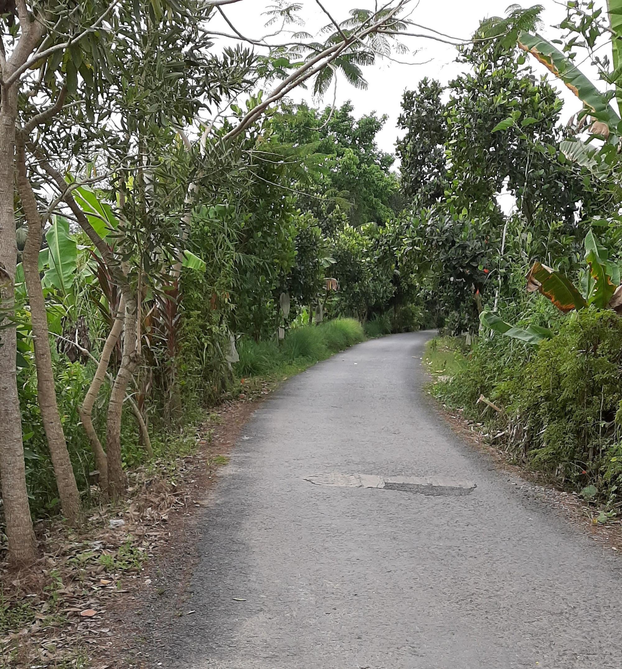 Hình ảnh chân thật vào những ngày tết ở một vùng quê thuộc tỉnh Đồng Tháp vắng vẻ, im lìm.