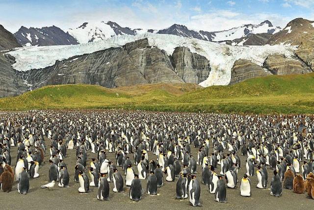 Ngây người khi phát hiện con chim cánh cụt màu vàng độc lạ, cực kỳ hiếm có - Ảnh 4.