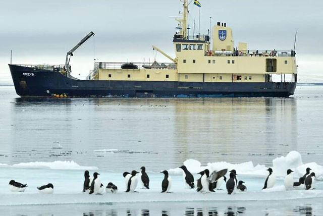 Ngây người khi phát hiện con chim cánh cụt màu vàng độc lạ, cực kỳ hiếm có - Ảnh 5.