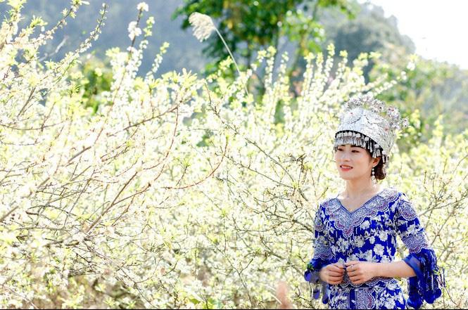 Thiếu nữ khoe sắc bên hoa mận nở trắng muốt nơi cổng trời đẹp như tranh - Ảnh 7.