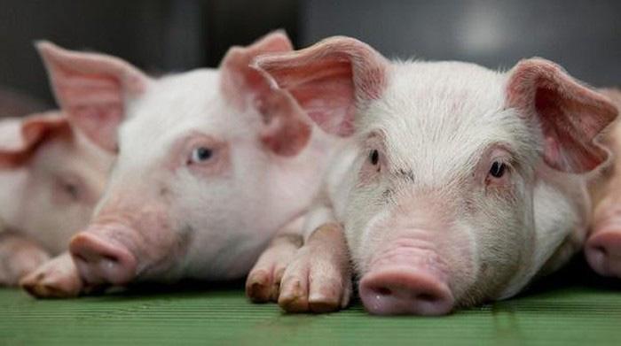 Giá nông sản hôm nay 22/2: Lợn hơi cao nhất 79.000 đồng/kg, cà phê đi ngang - Ảnh 1.