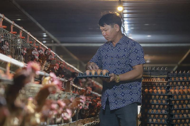 Hải Dương: Một ông nông dân trong vùng phong tỏa tiêu thụ được mấy chục vạn trứng nhờ cách này - Ảnh 1.