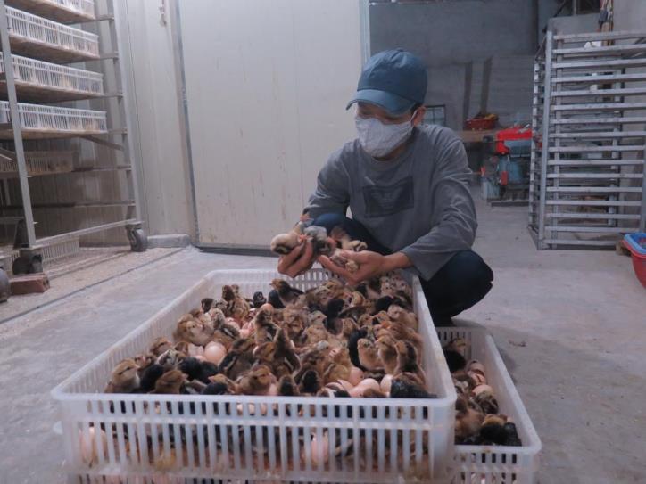 Hải Dương: Một ông nông dân trong vùng phong tỏa tiêu thụ được mấy chục vạn trứng nhờ cách này - Ảnh 2.