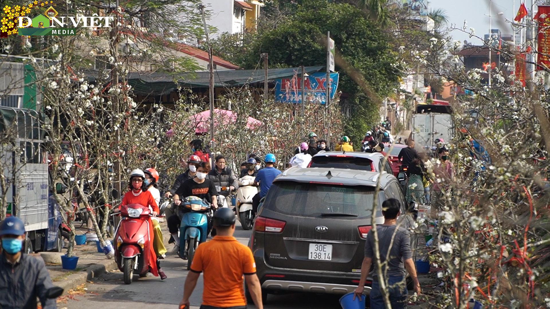 Hoa lê rừng xuống phố thu hút hàng nghìn người dân Thủ đô  - Ảnh 2.