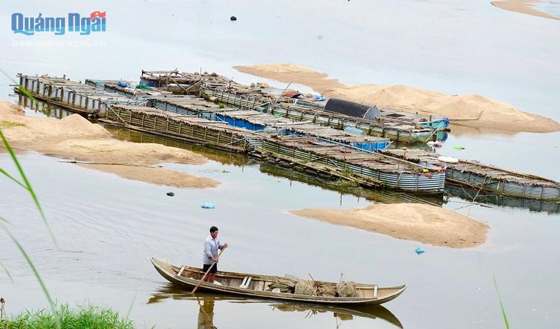 Nuôi loài cá ngon, sạch nổi danh trên sông Trà Khúc, nông dân ở đây mặt ai cũng rạng rỡ vì có thu nhập khá - Ảnh 7.