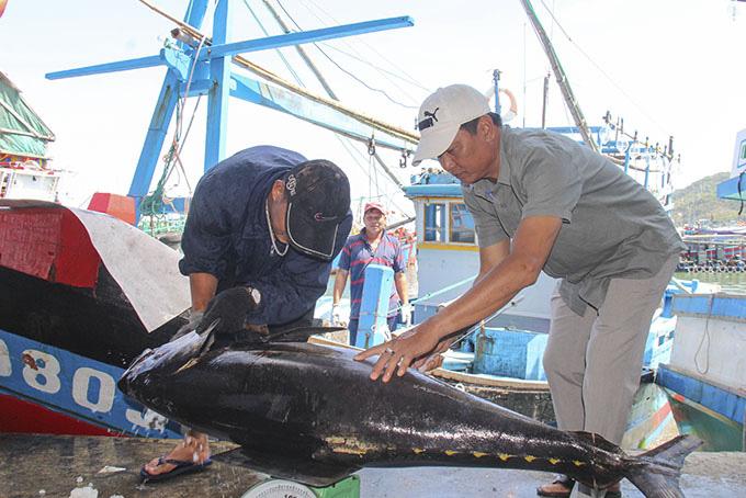Khánh Hòa: Dân bắt được toàn cá lớn đầu năm, loài cá gì to dài phải 2-3 người khênh? - Ảnh 6.