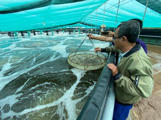 Hệ thống cấp nước biển sạch nuôi tôm công nghệ cao ở Kiên Giang - Ảnh 1.