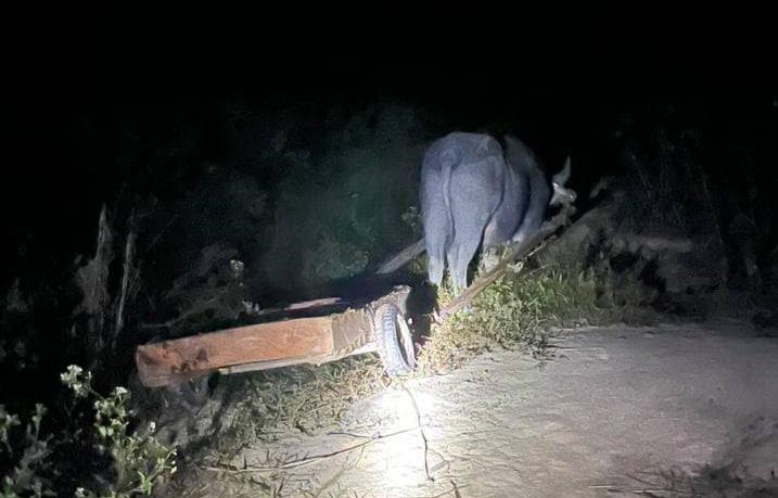 Rừng pơ-mu quý hiếm bị tàn phá: Lâm tặc đi một đường, bảo vệ rừng chốt một nẻo(?!) - Ảnh 2.