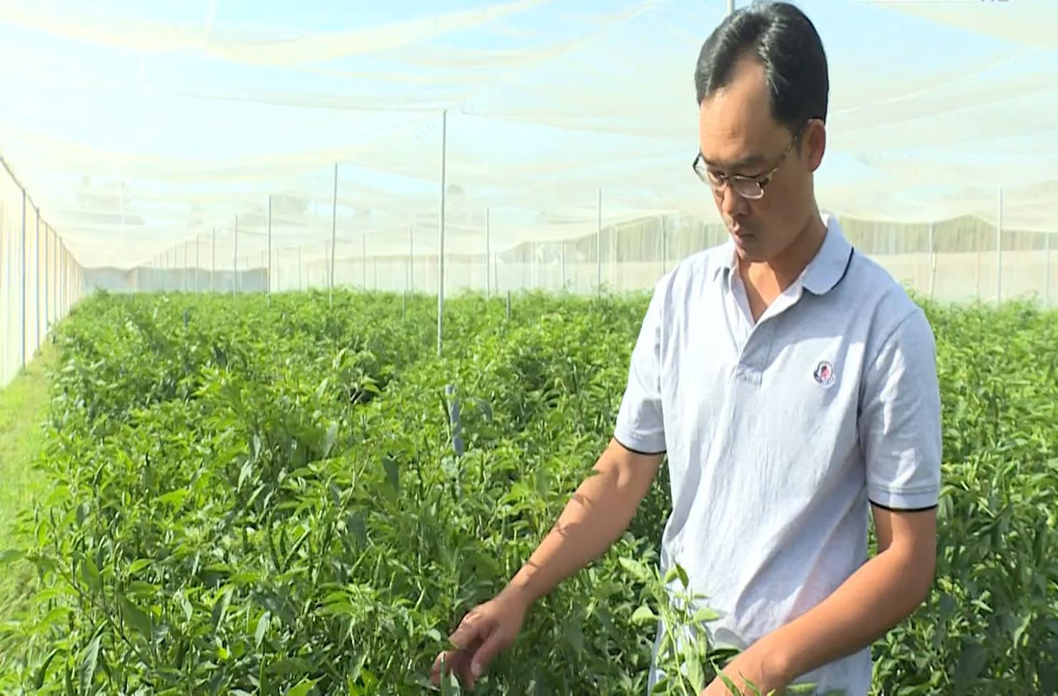 Trà Vinh: Mô hình HTX sản xuất nông nghiệp theo hướng hữu cơ - Ảnh 2.