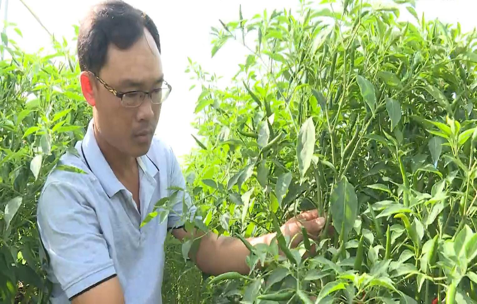 Trà Vinh: Mô hình HTX sản xuất nông nghiệp theo hướng hữu cơ - Ảnh 3.