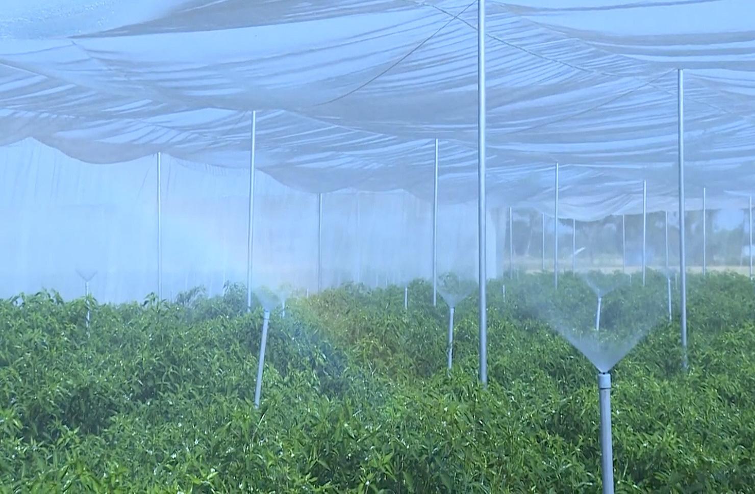 Trà Vinh: Mô hình HTX sản xuất nông nghiệp theo hướng hữu cơ - Ảnh 4.