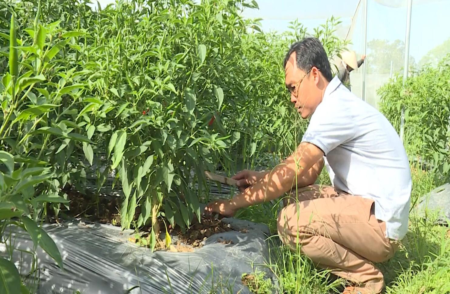 Trà Vinh: Mô hình HTX sản xuất nông nghiệp theo hướng hữu cơ - Ảnh 5.