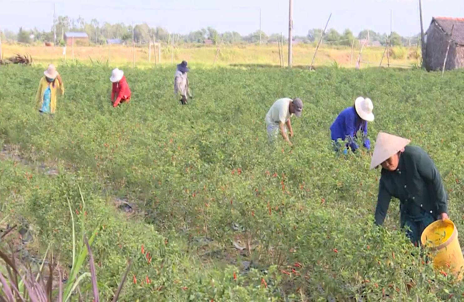 Trà Vinh: Mô hình HTX sản xuất nông nghiệp theo hướng hữu cơ - Ảnh 6.
