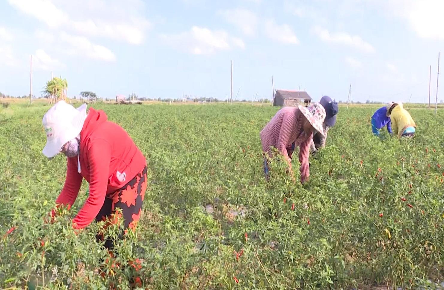 Trà Vinh: Mô hình HTX sản xuất nông nghiệp theo hướng hữu cơ - Ảnh 7.