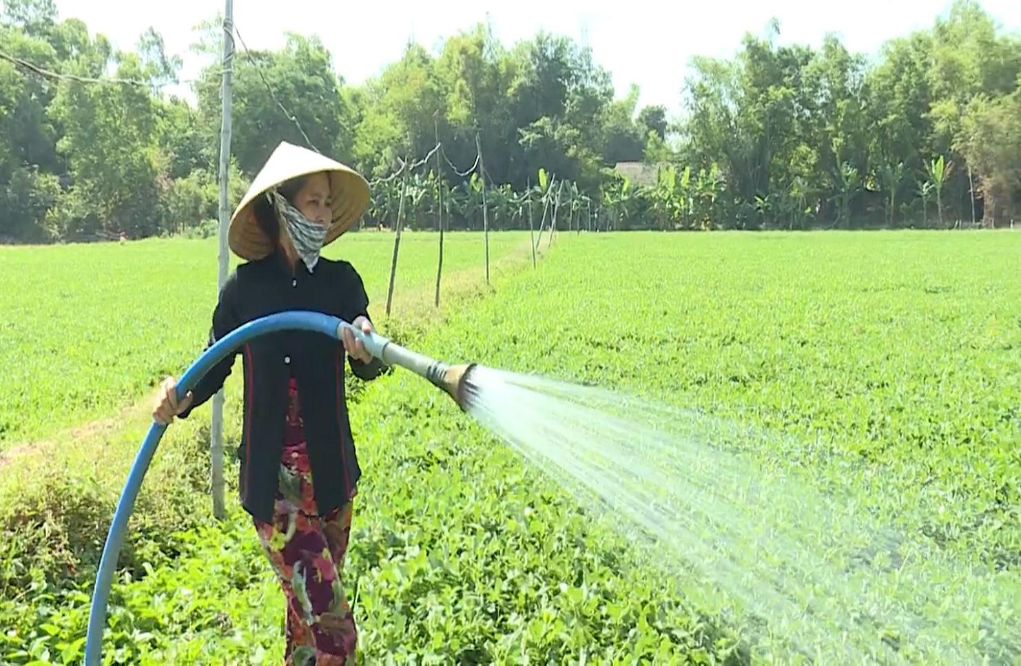 Trà Vinh: Mô hình HTX sản xuất nông nghiệp theo hướng hữu cơ - Ảnh 9.
