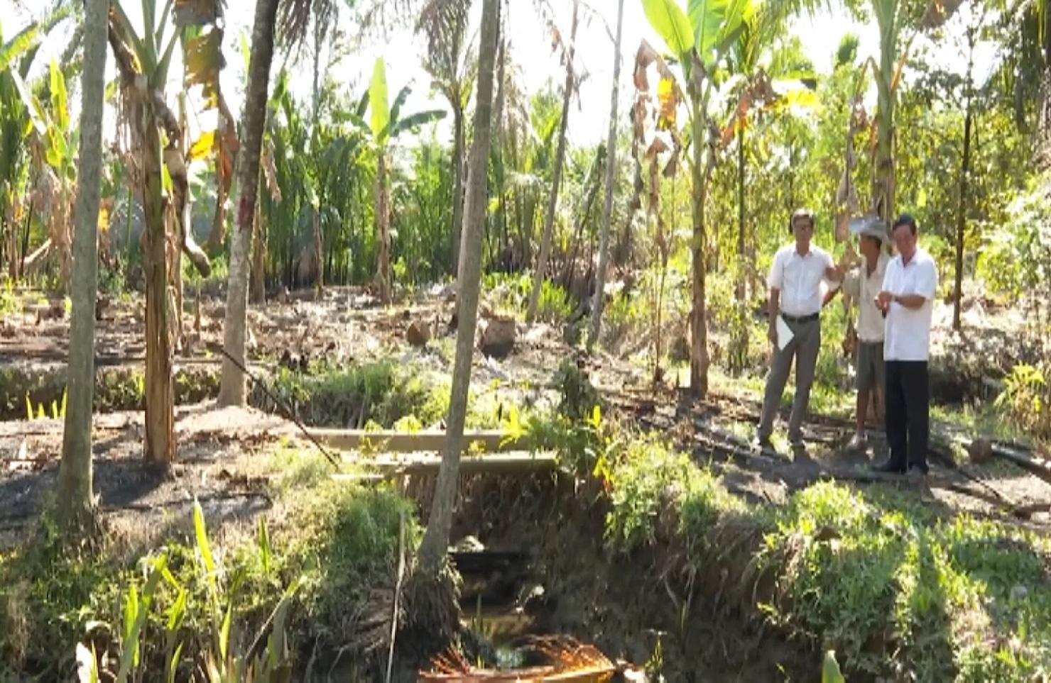 Bến Tre: Sâu đầu đen bùng phát gây hại trên cây dừa, nhiều bà con mất nguồn thu nhập - Ảnh 7.