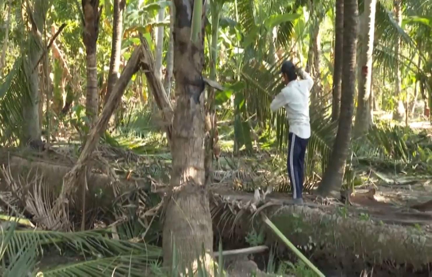 Bến Tre: Sâu đầu đen bùng phát gây hại trên cây dừa, nhiều bà con mất nguồn thu nhập - Ảnh 9.