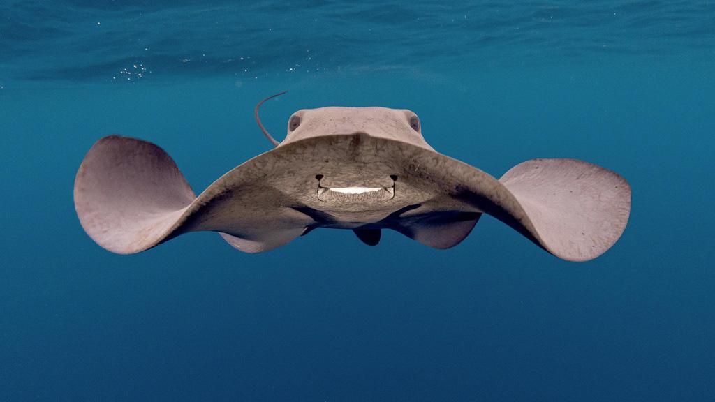 Hình ảnh con ếch đoạt giải cuộc thi Nhiếp ảnh dưới nước năm 2021 - Ảnh 2.