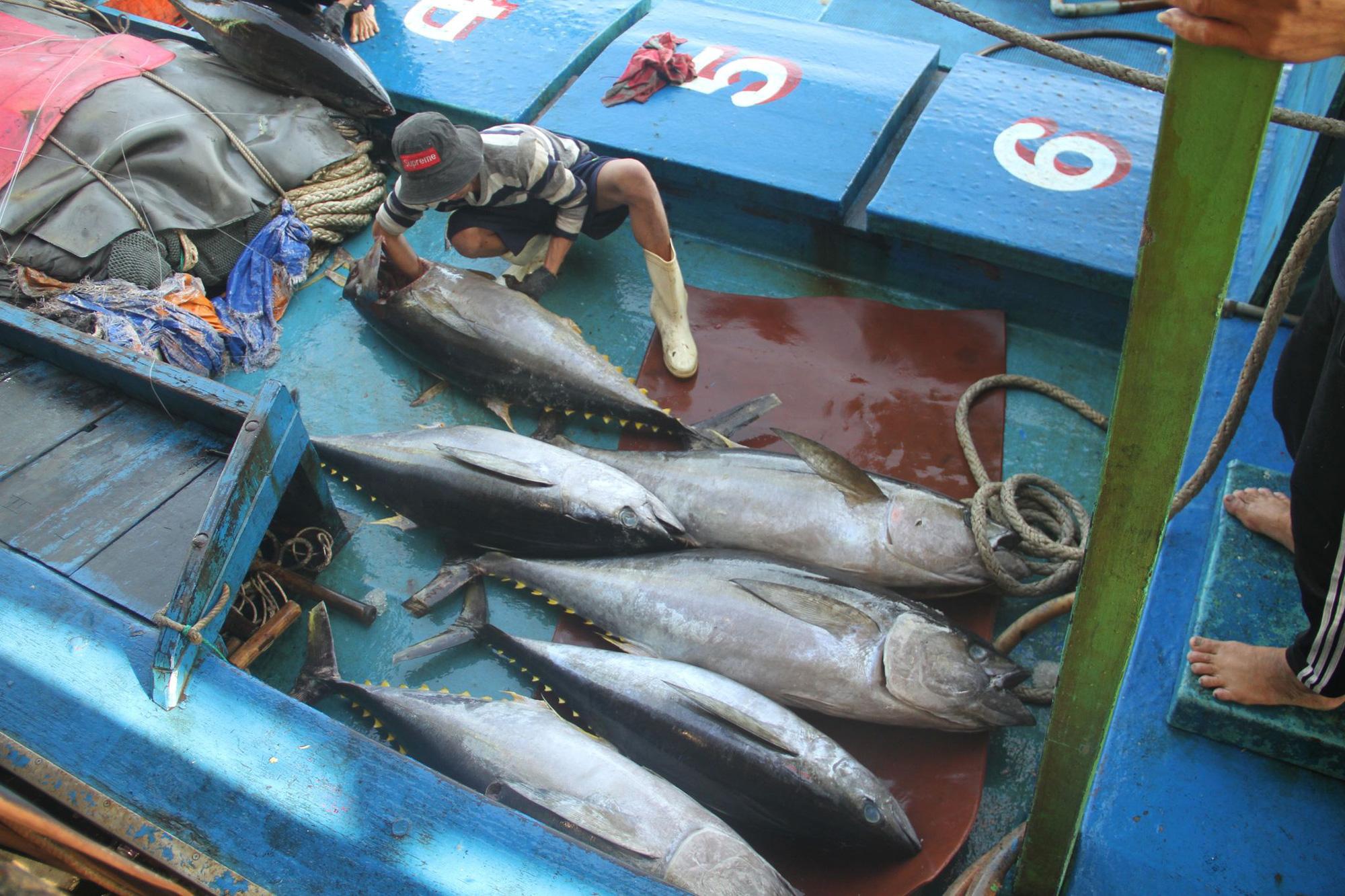 """Bình Định quyết tâm khắc phục """"thẻ vàng"""" thủy sản ngay từ cảng cá - Ảnh 2."""