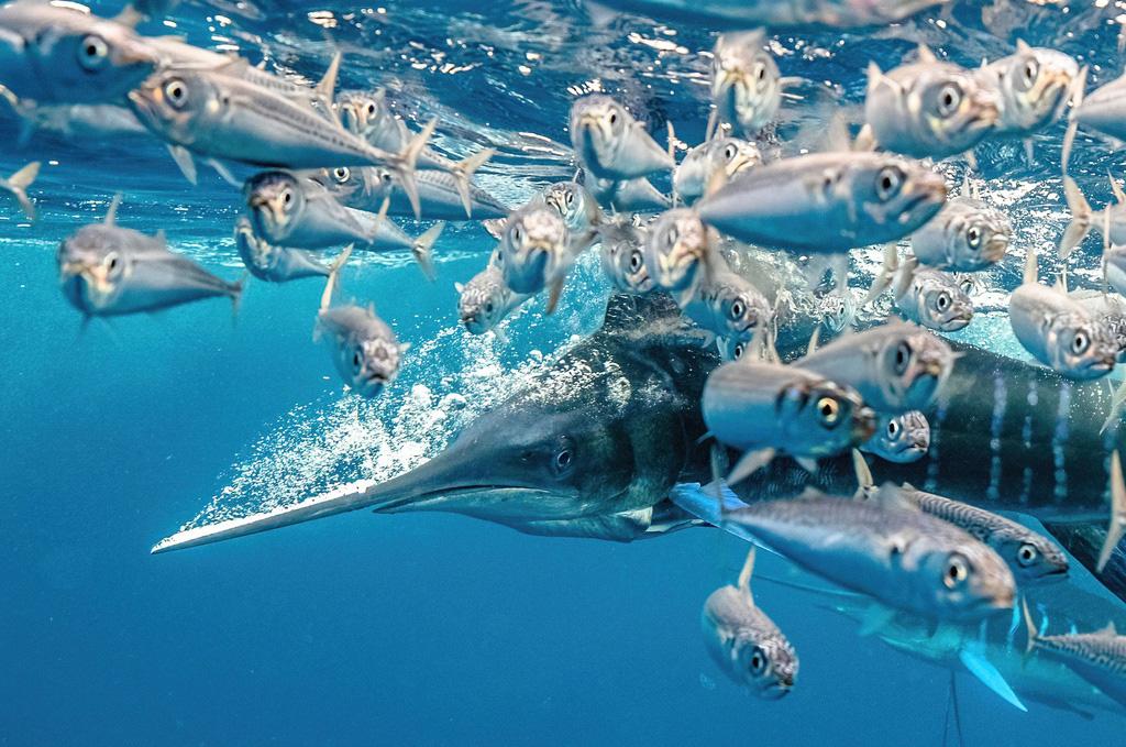 Hình ảnh con ếch đoạt giải cuộc thi Nhiếp ảnh dưới nước năm 2021 - Ảnh 4.