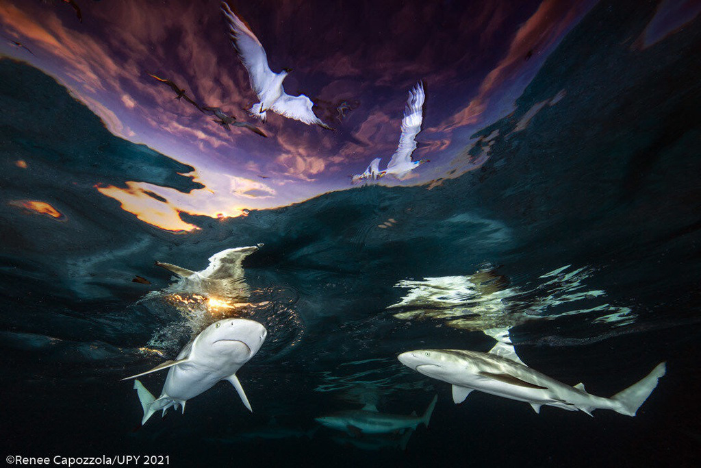 Hình ảnh con ếch đoạt giải cuộc thi Nhiếp ảnh dưới nước năm 2021 - Ảnh 7.