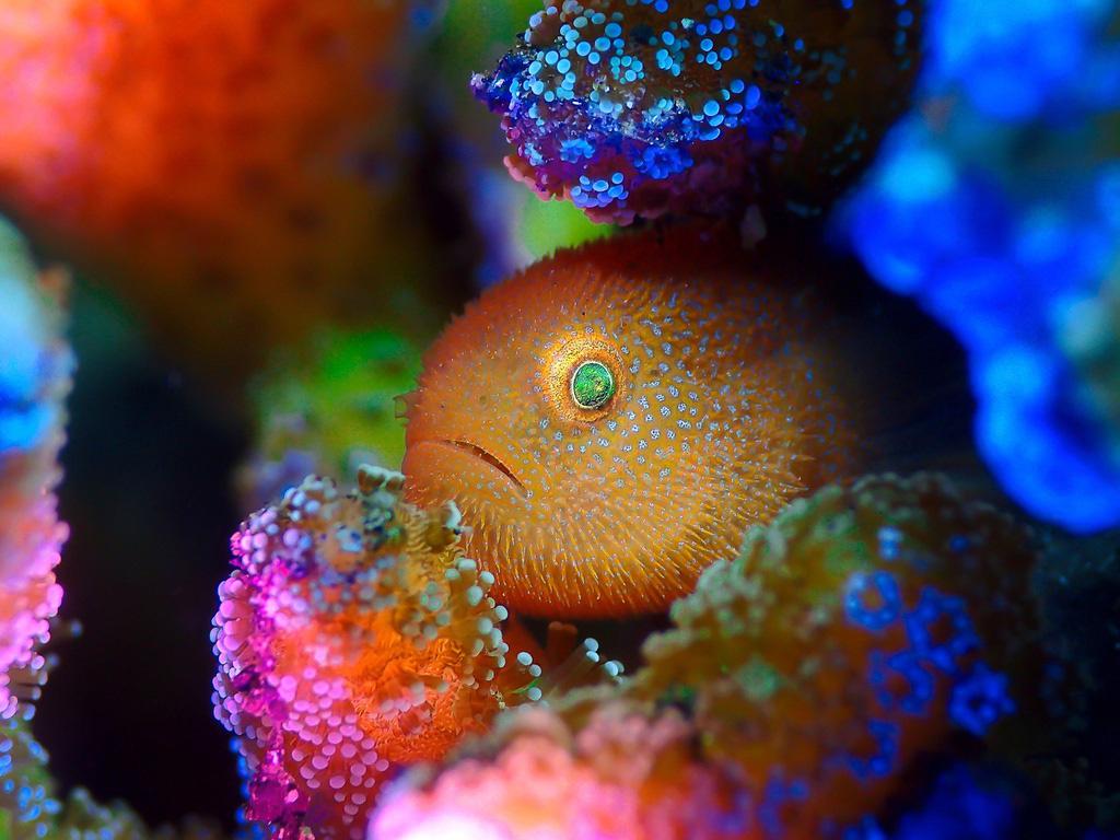 Hình ảnh con ếch đoạt giải cuộc thi Nhiếp ảnh dưới nước năm 2021 - Ảnh 8.