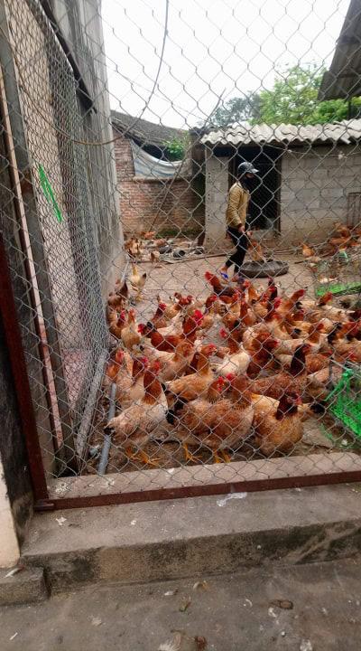 Giá gia cầm hôm nay 23/2: Cập nhật giá các loại gà, vịt mới nhất tại ba miền, giá gà công nghiệp tăng nhẹ - Ảnh 2.