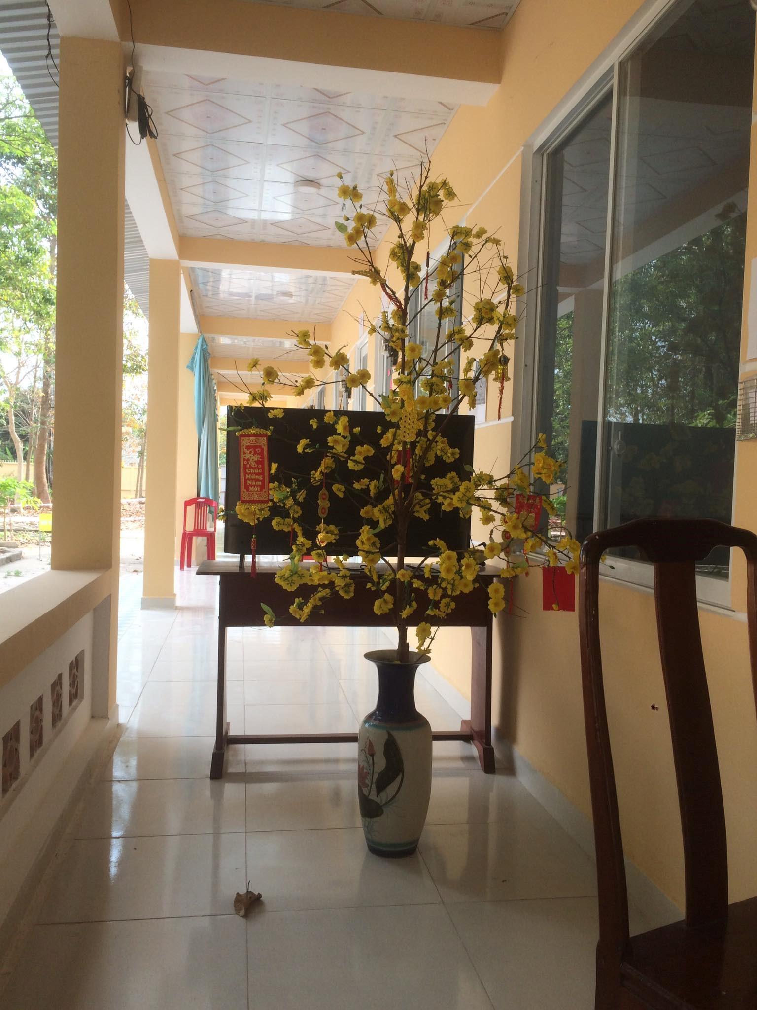 Hình ảnh cây mai khoe sắc vàng trong khu cách ly.