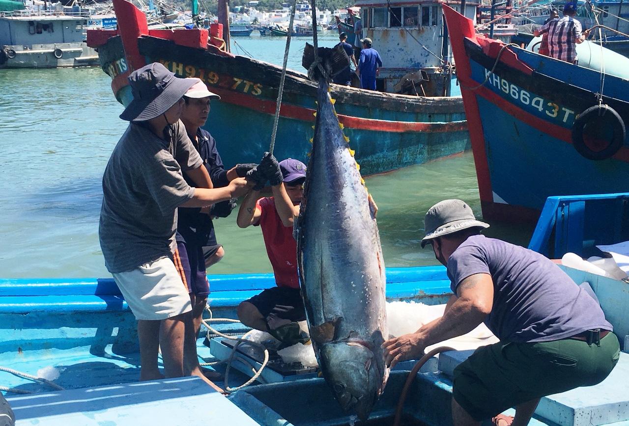 Hàng chục chuyến tàu mang loại cá to, bự từ đảo trở về và bán cho thương lái với giá cao - Ảnh 1.