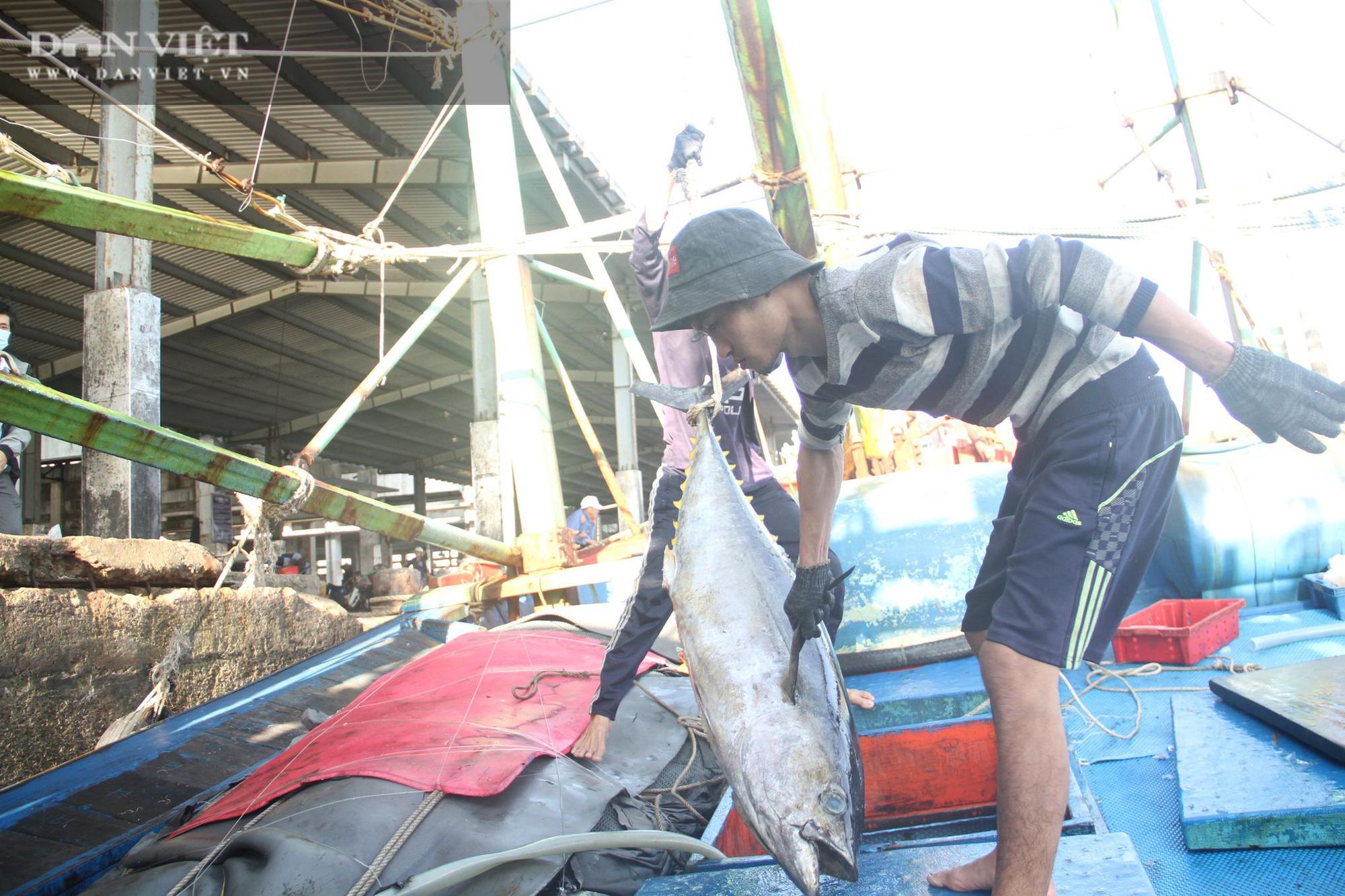 Cận cảnh đưa cá ngừ đại dương về bờ sau chuyến biển xuyên Tết - Ảnh 4.