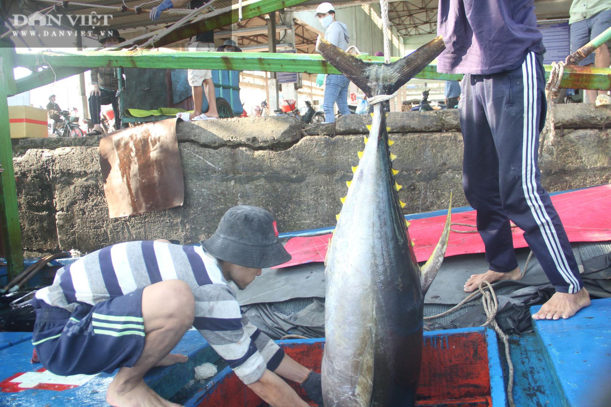Cận cảnh đưa cá ngừ đại dương về bờ sau chuyến biển xuyên Tết - Ảnh 5.