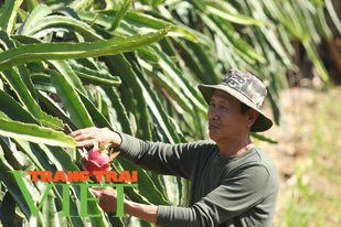 Hội Nông dân Sơn La: Làm tốt các hoạt động dạy nghề, hỗ trợ nông dân - Ảnh 5.