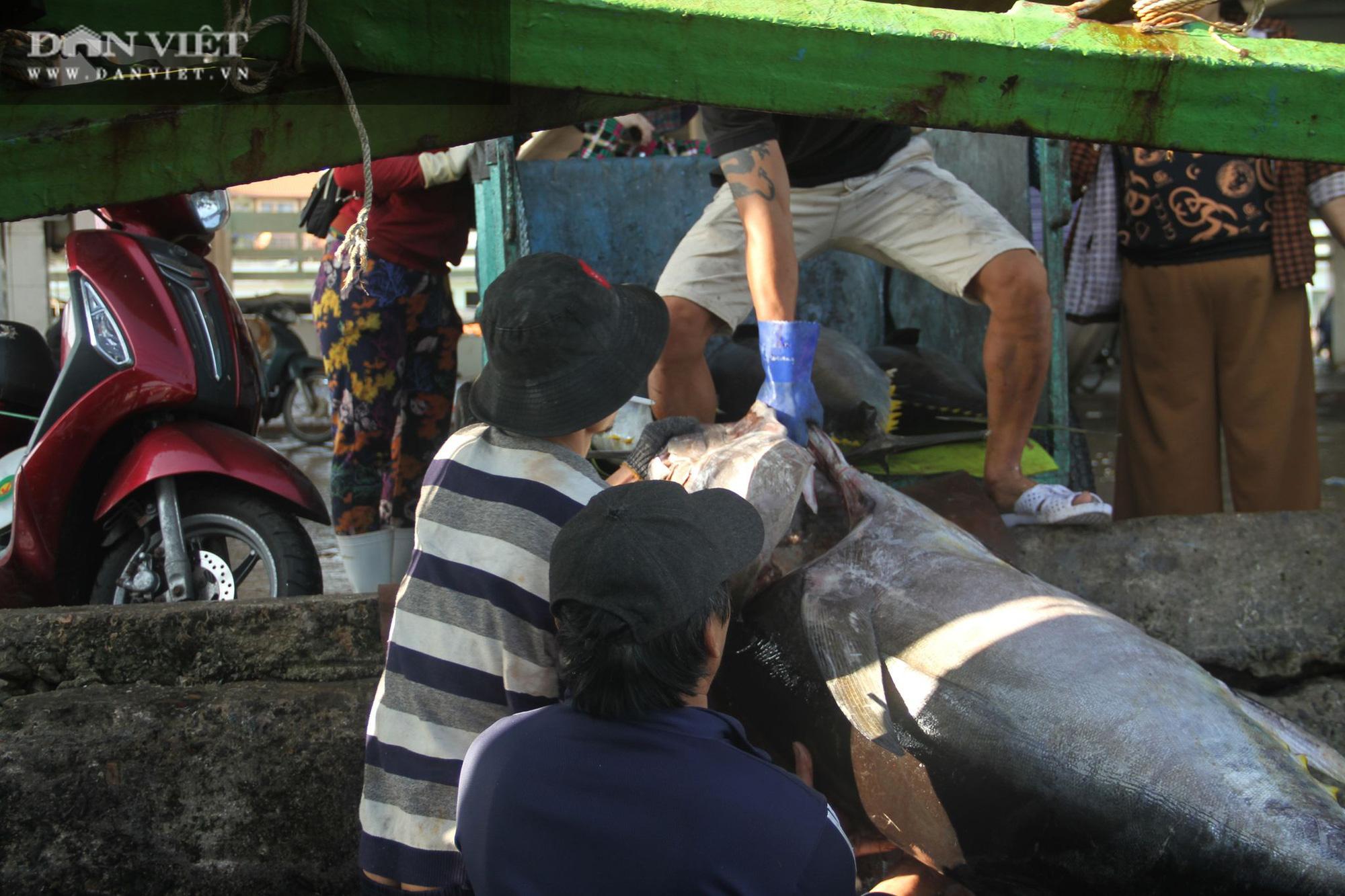 Cận cảnh đưa cá ngừ đại dương về bờ sau chuyến biển xuyên Tết - Ảnh 15.
