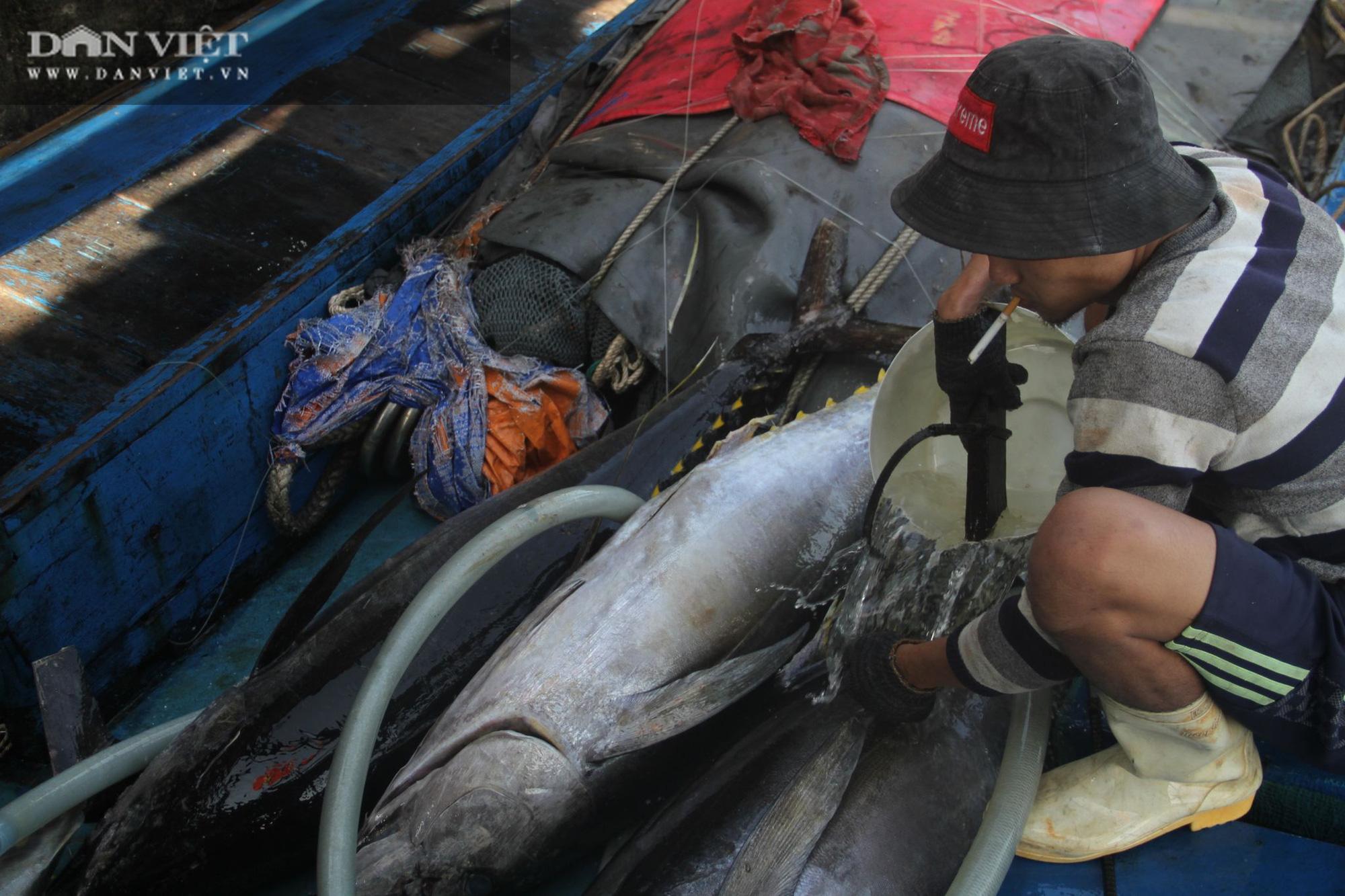 Cận cảnh đưa cá ngừ đại dương về bờ sau chuyến biển xuyên Tết - Ảnh 14.