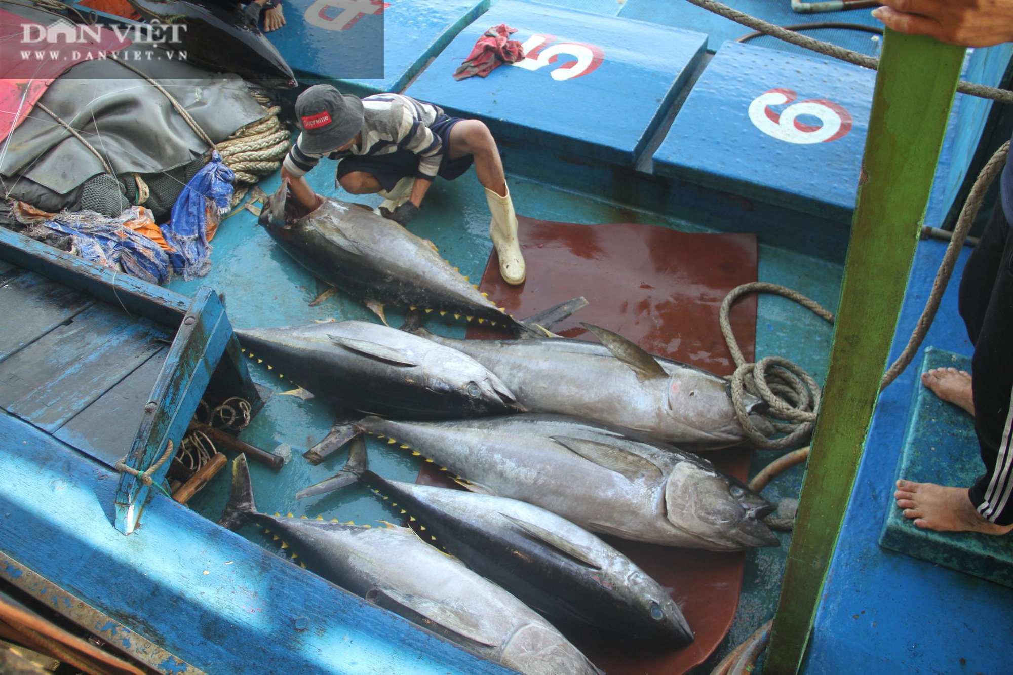 Cận cảnh đưa cá ngừ đại dương về bờ sau chuyến biển xuyên Tết - Ảnh 9.