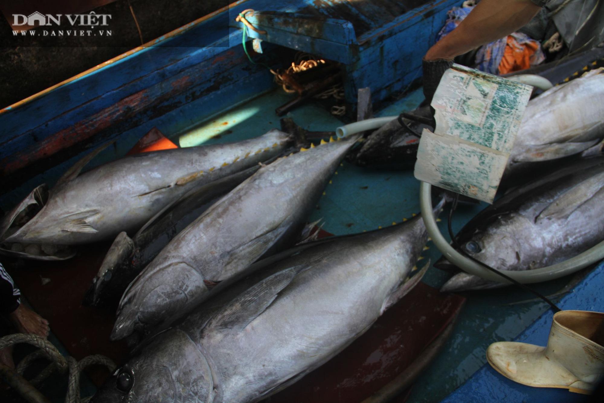 Cận cảnh đưa cá ngừ đại dương về bờ sau chuyến biển xuyên Tết - Ảnh 11.