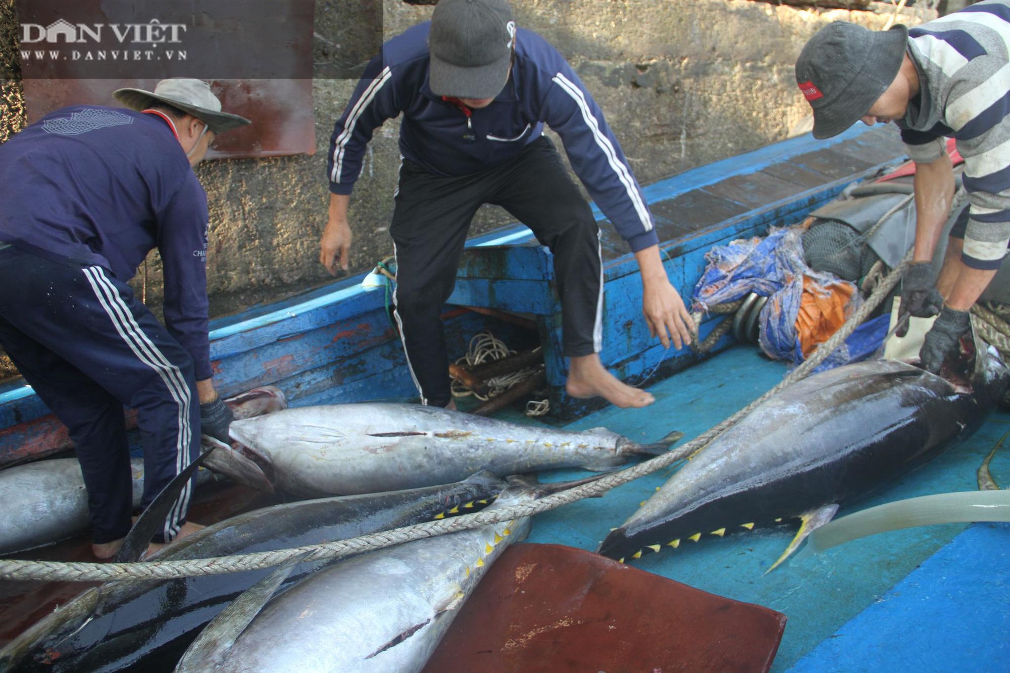 Cận cảnh đưa cá ngừ đại dương về bờ sau chuyến biển xuyên Tết - Ảnh 10.